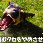 飼い主を威嚇して吠える犬に噛むクセをやめさせるしつけ方法