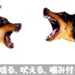 【悩み】犬が唸る!吠える!噛み付く具体的な理由と病気の可能性