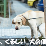 【犬の便秘】症状と原因★解消させる方法をわかりやすく解説★