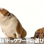 初めて犬を飼う人のための安心安全なドッグフードの選び方