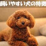 初心者でも飼いやすい!人気犬種の6つの代表的な性格の特徴