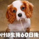 犬のしつけは生後60日後くらいから始めるのがベスト!!