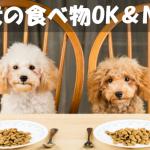 【犬の食べ物OK&NG】初心者が知るべき犬の体に良い物悪い物