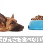 【食欲がなくて元気がない】愛犬がエサをを食べない原因と対処法