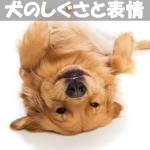 【犬の気持ち】がわかる!!あるあるしぐさと表情まとめ