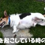 【痙攣】犬の全身または後ろ足など体の一部が震えている原因