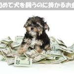 小型犬を飼うのに必要な年間維持費はおよそ30万円!?