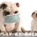 【病気】犬に発症するアレルギー性皮膚炎の原因と治療法