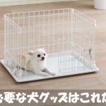 初めて犬を飼う人必見!子犬を迎える準備に必要なグッズ