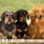 犬初心者必見!!【長毛と短毛】室内で飼いやすい種類は長毛種