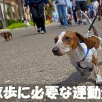 はじめて犬を飼う人必見【犬種別】犬の散歩に必要な運動量