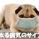 去勢・避妊だけではない!?犬が太る病気の原因とサイン