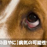 【犬の目やに】茶色?白?色と乾湿・量でわかる原因と取り方
