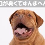 【犬の口臭】口が臭い原因が病気のときの予防と対策
