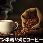 犬がコーヒー豆・粉・ゼリーを誤飲したときの中毒症状と治療法