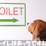 室内犬にトイレのしつけをしたいなら犬の習性を利用しなさい!