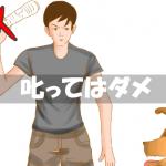 【叱るのダメ】犬がトイレのしつけに失敗したときの正しい対処法