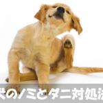 【犬のノミダニ】症状と原因・飲み薬による治療の流れ
