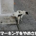 犬にマーキングを室内でさせない具体的な対策方法