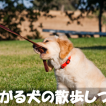 歩かない!座り込む!【嫌がる犬の散歩しつけマニュアル】