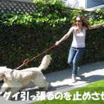 【危険】犬が散歩でグイグイ引っ張るのをやめさせるしつけ方法