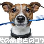 歯磨きを嫌がる犬の飼い主さん必見!正しい歯磨きのやり方のコツ