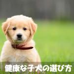初心者必見!!良い犬の選び方【健康な子犬を買うポイント】