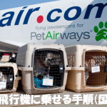 【機内持ち込み不可】犬を飛行機に乗せるときの準備と国内線料金