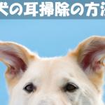 【犬の耳掃除方法】嫌がる犬に綿棒と洗浄液を使う耳掃除のコツ