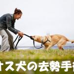 【犬の去勢】手術前に確認しておきたいメリットとデメリット