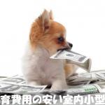 一人暮らし男女におすすめ!飼育費用の安い室内小型犬種5選