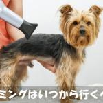 犬のトリミングはいつから行けばいい?頻度や費用の疑問を解消