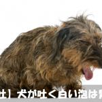 【犬が吐いて元気がない】白い泡の正体は胃液!嘔吐の原因を解明