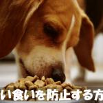 愛犬の拾い食いを防止する正しいしつけ方法