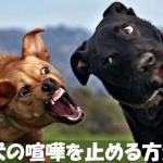 いざという時のために覚えておきたい【犬の喧嘩の止め方】