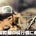犬を国際線・飛行機で海外に連れていきたいときの手順