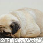 【犬の下痢や血便】の原因と治す方法をわかりやすく解説