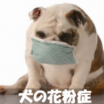 【犬の花粉症】皮膚炎くしゃみ鼻水咳目やにの症状を改善する方法