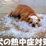 【犬の熱中症状と対策】室内外の留守番や散歩等短頭種は要注意!