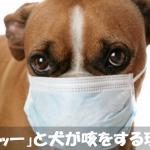 【犬の咳】カッーと吐きそうにえずき止まらないのはなぜ?