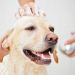 【犬のお風呂】愛犬が喜ぶ快適なお湯の温度は35~37℃