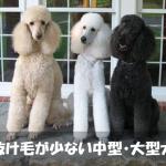 抜け毛の少ない中型・大型犬種ランキングベスト3