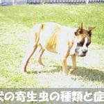 【閲覧注意】画像でみる犬の寄生虫の種類と症状