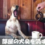 【緊急】突然の来客!今すぐできる部屋の犬の臭いを消す方法