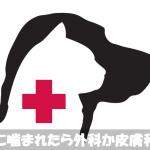 犬に噛まれたら症状別に消毒・止血処置をして外科・皮膚科病院へ