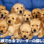 はじめて犬を飼う人必見!信頼できるブリーダーを見つける方法
