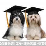 【犬の褒め方】犬のしつけで押さえておきたい3つのキーワード