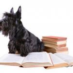 初めて小型犬を飼う前に初心者がすべき飼い方の情報収集法