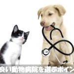 初めて犬を飼う人必見!動物病院を選ぶポイントと受診時の注意点