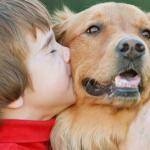 犬の撫で方|喜ぶ触り方のコツ